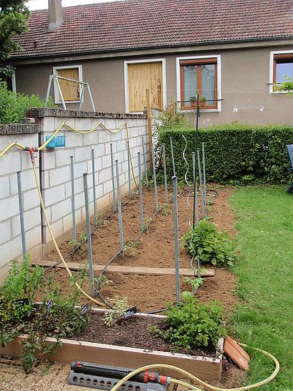 plantation tomates 2011 10807714.cf3e0eed.560