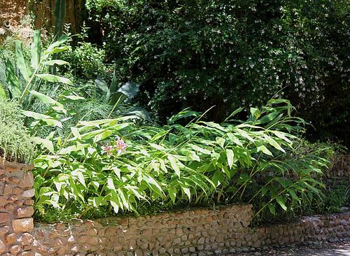(13) Le Parc du Mugel et son jardin exotique - La Ciotat - Page 2 10997715.9f3055d0.500