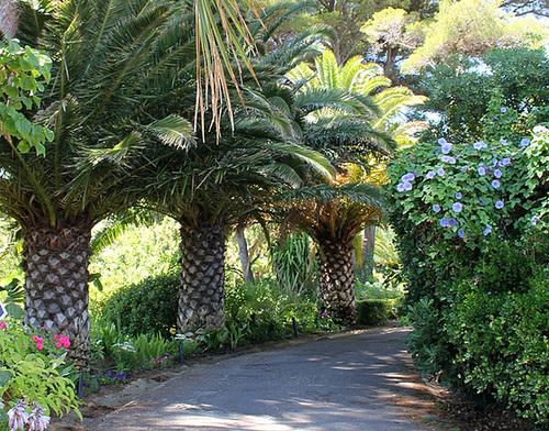 (13) Le Parc du Mugel et son jardin exotique - La Ciotat 10997949.7c44ee31.500