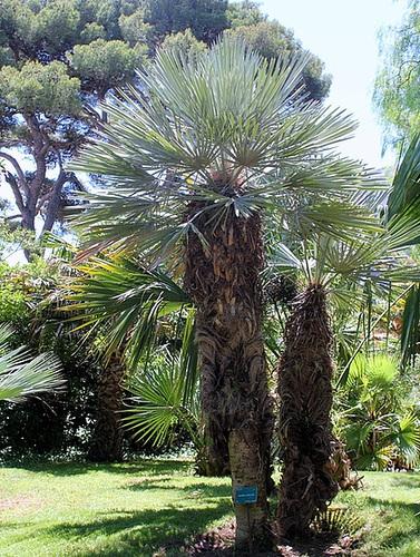 (13) Le Parc du Mugel et son jardin exotique - La Ciotat 10998250.f808b4c8.500