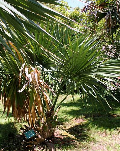 (13) Le Parc du Mugel et son jardin exotique - La Ciotat 10998253.36f9c851.500