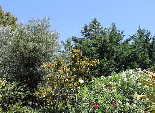 (13) Le Parc du Mugel et son jardin exotique - La Ciotat 10998255.d21ff853.500