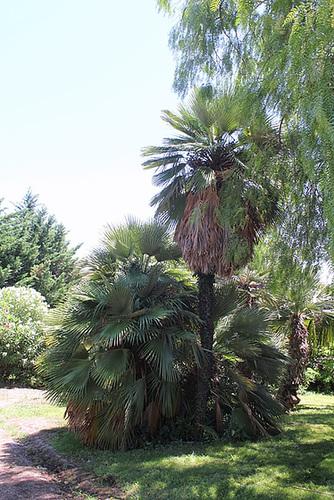(13) Le Parc du Mugel et son jardin exotique - La Ciotat 10998258.8f9fdfef.500