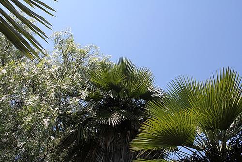 (13) Le Parc du Mugel et son jardin exotique - La Ciotat 10998285.bccde5e5.500