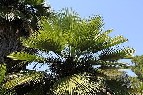 (13) Le Parc du Mugel et son jardin exotique - La Ciotat 10998286.caf0eadb.500