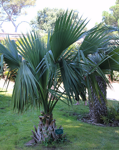 (13) Le Parc du Mugel et son jardin exotique - La Ciotat 10998800.f456e739.500