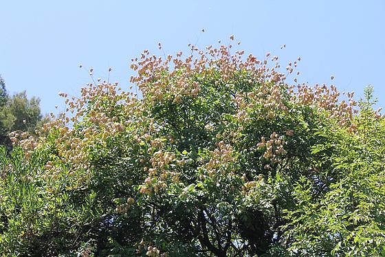 (13) Le Parc du Mugel et son jardin exotique - La Ciotat 10998804.af40e126.560
