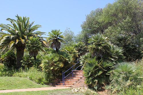 (13) Le Parc du Mugel et son jardin exotique - La Ciotat 10998806.82441a4f.500