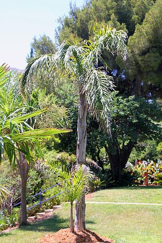 (13) Le Parc du Mugel et son jardin exotique - La Ciotat 10998810.bf637bbc.500