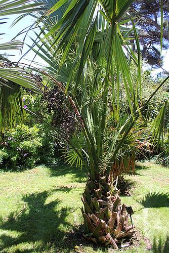 (13) Le Parc du Mugel et son jardin exotique - La Ciotat 10998979.62f66594.500