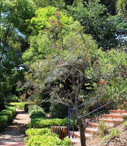 (13) Le Parc du Mugel et son jardin exotique - La Ciotat 10998981.8c5b206b.500