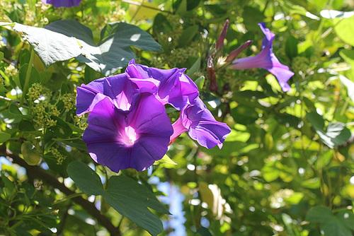 (13) Le Parc du Mugel et son jardin exotique - La Ciotat 10998986.46388c2f.500