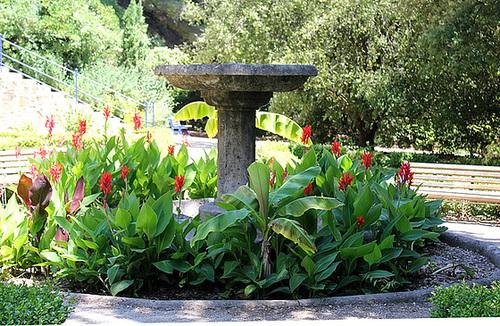 (13) Le Parc du Mugel et son jardin exotique - La Ciotat - Page 2 11019885.86789eee.500