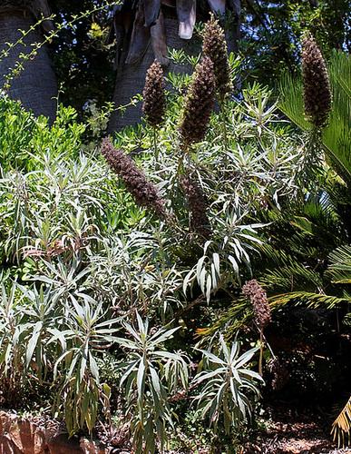 (13) Le Parc du Mugel et son jardin exotique - La Ciotat 11019901.a42b5b28.500