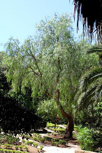 (13) Le Parc du Mugel et son jardin exotique - La Ciotat - Page 2 11019903.d1cf984e.500