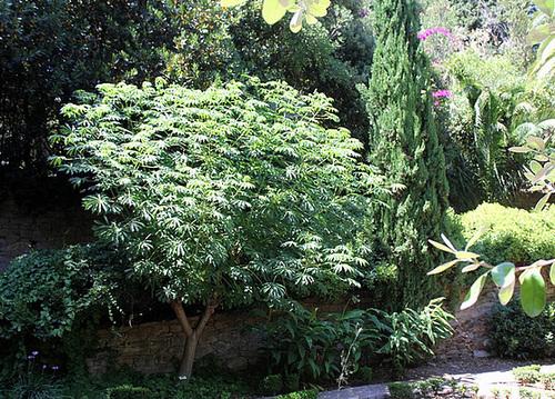 (13) Le Parc du Mugel et son jardin exotique - La Ciotat - Page 2 11019904.78f17ddd.500