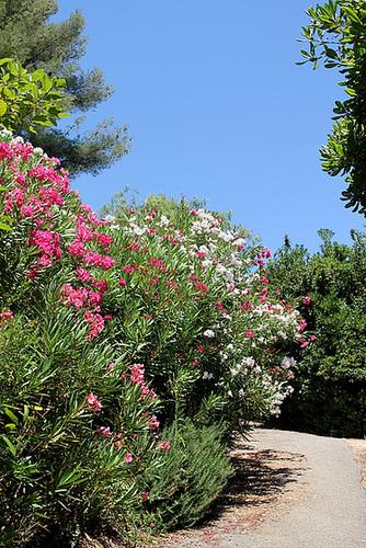 (13) Le Parc du Mugel et son jardin exotique - La Ciotat 11019968.38fb2a4c.500