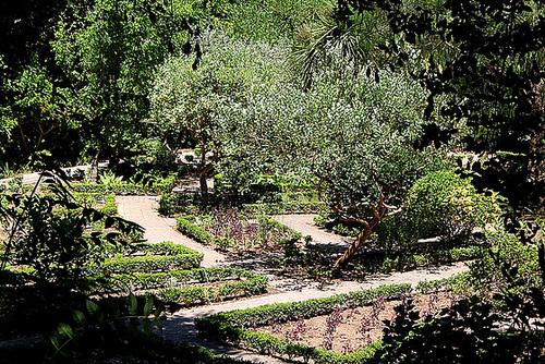 (13) Le Parc du Mugel et son jardin exotique - La Ciotat - Page 2 11019970.1014f87e.500