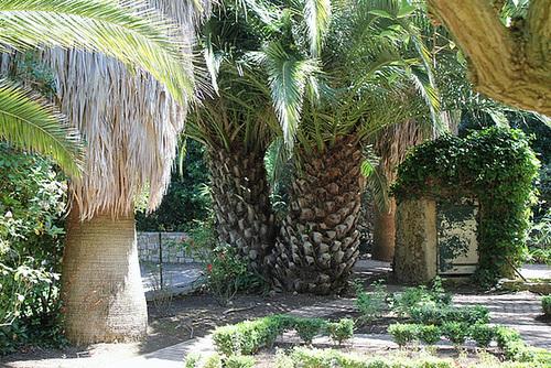 (13) Le Parc du Mugel et son jardin exotique - La Ciotat - Page 2 11019981.28eed7ed.500