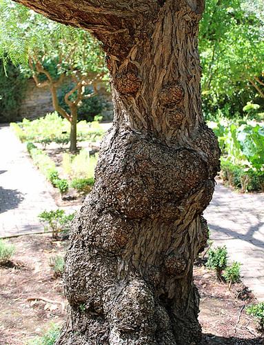 (13) Le Parc du Mugel et son jardin exotique - La Ciotat - Page 2 11019983.598f590a.500