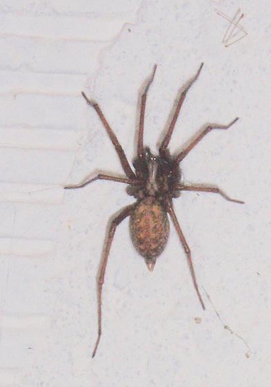 araignée P9023137-2