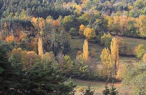 couleurs d'automne en Velay 11660704.8e574eac.500