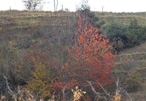 couleurs d'automne en Velay 11660744.c9d0acfd.500