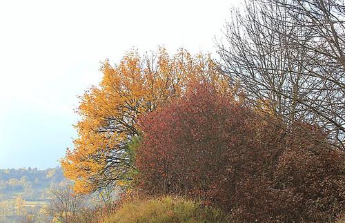 couleurs d'automne en Velay 11660747.29b92a2e.500