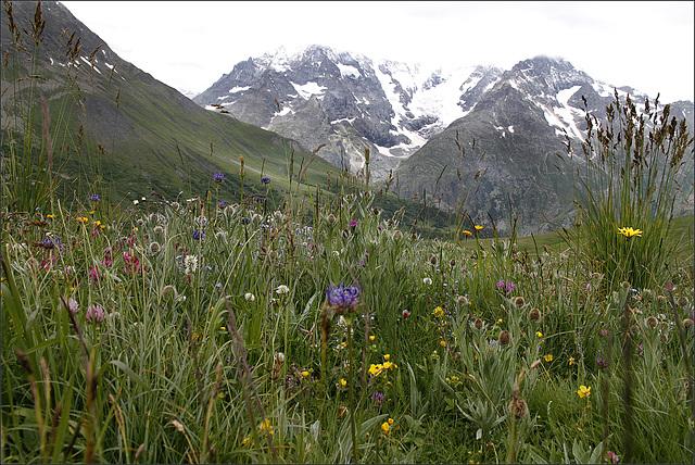prairies alpines début juin dans le Briançonnais (05) - Page 2 35126191.2f40864b.640