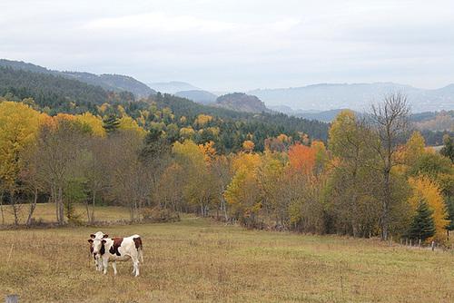 Velay en automne-Vers le Puy (5)