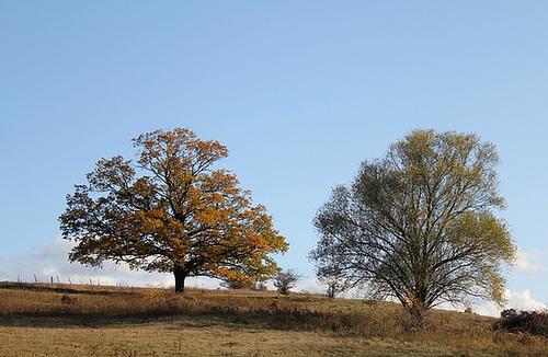 Le Chêne et le Saule