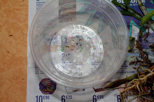 Pot à Orchidée-Rempotage de boutures de Dendrobium (17)