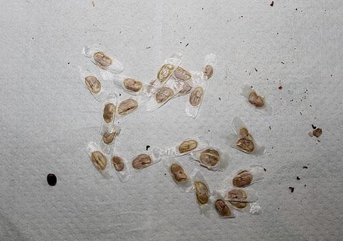 photos de graines de bignoniacées exotiques 12006701.ed5a78d3.500