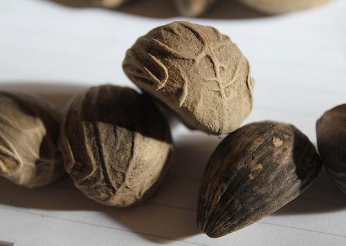 photos de fruits et graines de palmiers - Arecaceae 12109322.32954368.500