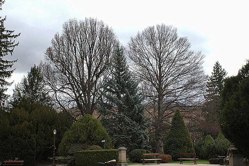 Chêne et hêtre