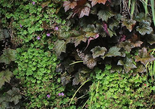 Murs végétalisés - détails (4)