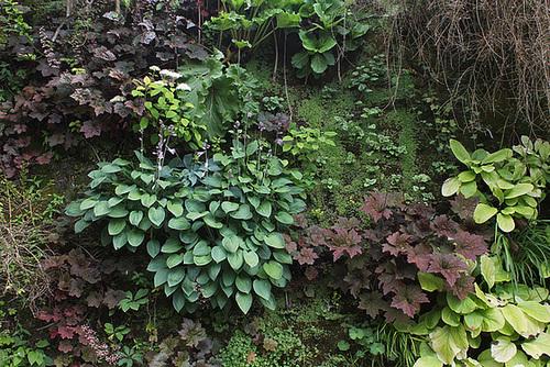 Murs végétalisés - détails (6)