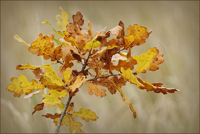 Concours: Les plantes nous en font voir de toutes les couleurs. Participations (photo normale) 28387077.816fb8a2.640