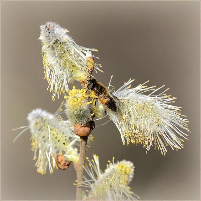 petites bêtes qui montent, qui volent - 2  31215413.f9c13ee2.640