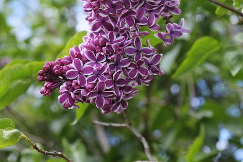 neira - le jardin campagnard de la brebis  - Page 4 32860789.53d46b5d.500