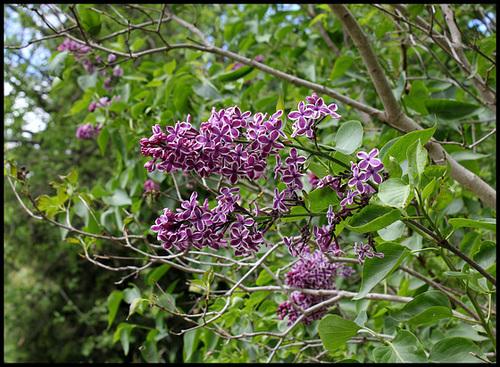 neira - le jardin campagnard de la brebis  - Page 4 32860795.157d9f5a.500