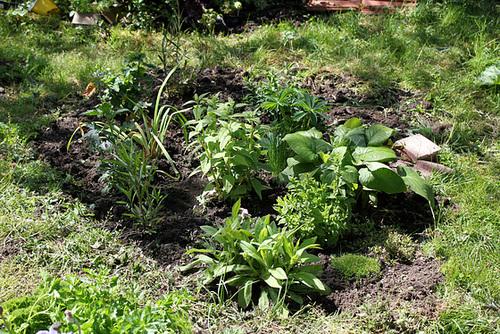neira - le jardin campagnard de la brebis  - Page 4 32881297.1dd36e09.500