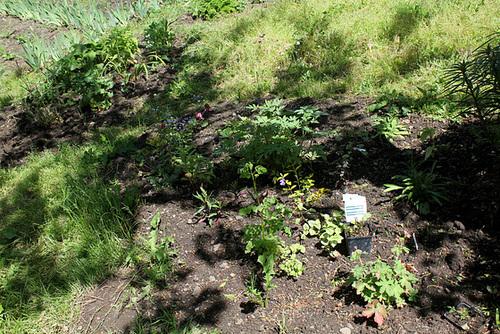 neira - le jardin campagnard de la brebis  - Page 4 32881305.29ef9bec.500