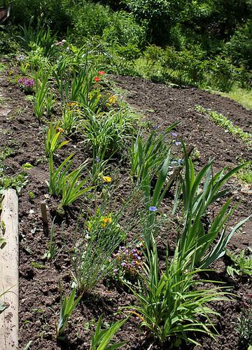 neira - le jardin campagnard de la brebis  - Page 4 32881381.af40c056.500