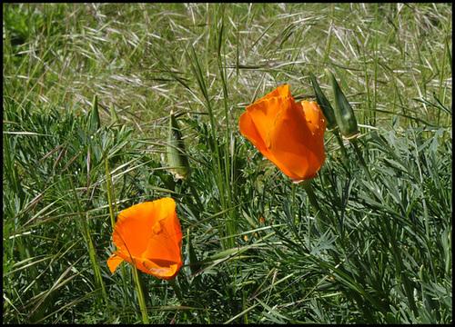 neira - le jardin campagnard de la brebis  - Page 4 32881449.f223d303.500