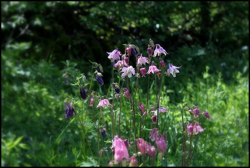 neira - le jardin campagnard de la brebis  - Page 4 32881577.a72196ff.500