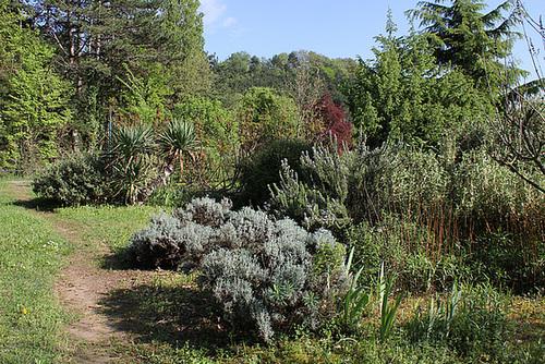 Zone séche - Lavandes - romarins -Yuccas