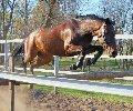 Bán Cao Ngựa Tại Thái Bình 393161