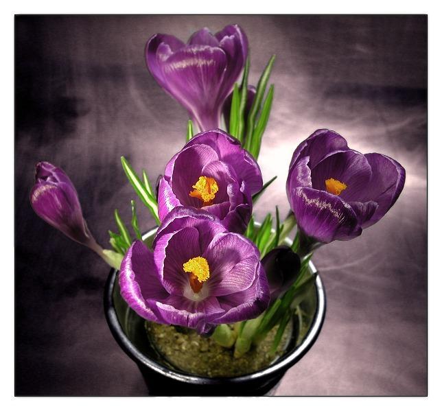 في روحك  وردة لمن   ترسل عطرها  / إهداء  لمن تحب بلغة الورد - صفحة 2 110216125937100