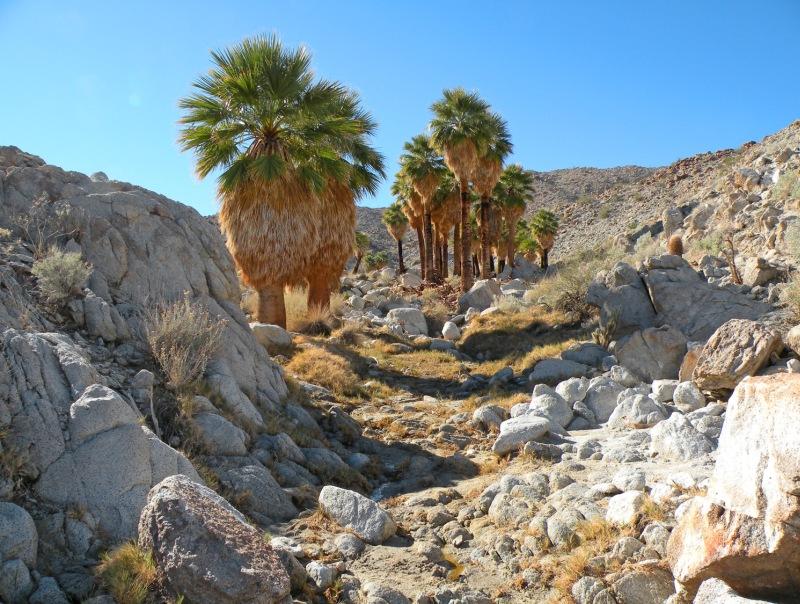 Самые интересные места на планете 21-Palm%20Canyon